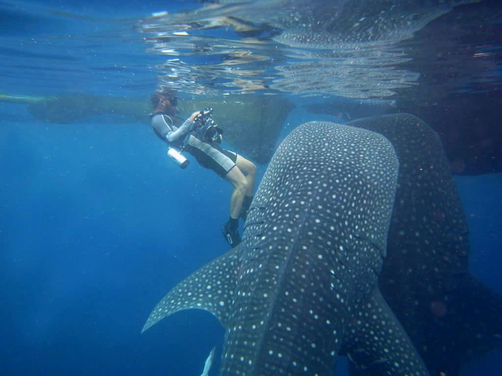 Tips To Remain Safe During Shark Diving