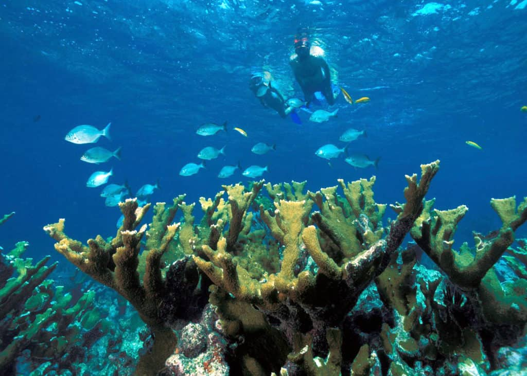 Seven Best Spots For Scuba Diving, Miami