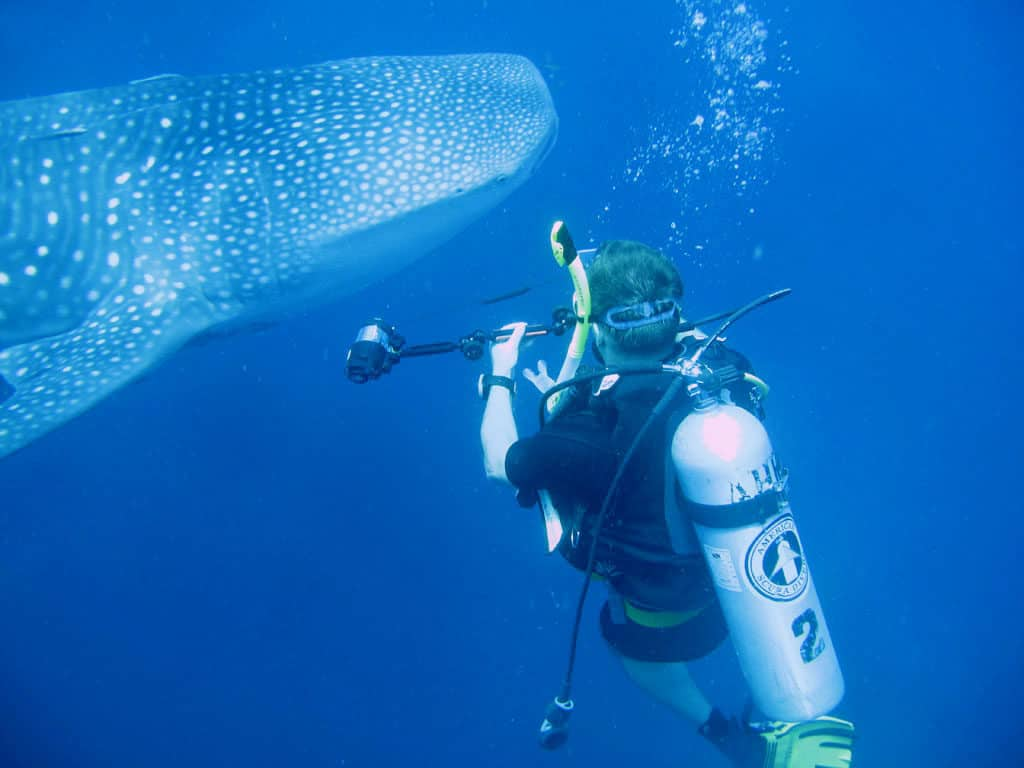 Useful Tips For Choosing A Perfect Shark Diving Package And Enjoying Your Holiday