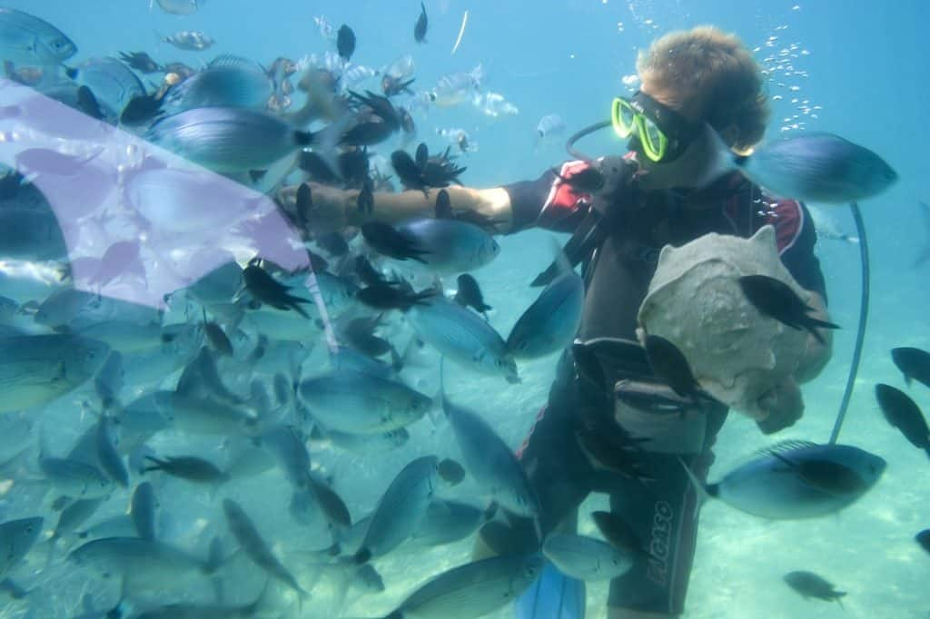Best Places To Scuba Dive In San Diego