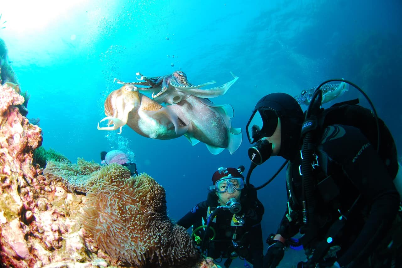 Your Ticket To Becoming A Diver- Scuba Schools International