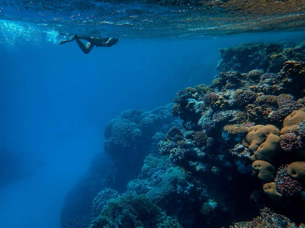 Practice Scuba Diving: Skills To Practice From Home
