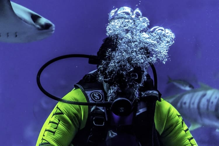 Scuba Diving Regulator Things You Must Know